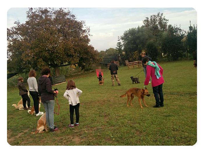 Centro Cinofilo Dogs & Co Academy