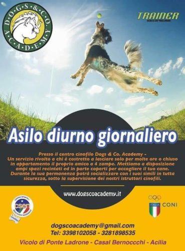 asilo_diurno
